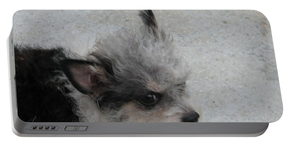 Puppy Portable Battery Charger featuring the photograph Airport Pup by Kelly Mezzapelle