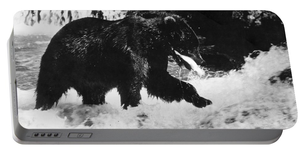 20th Century Portable Battery Charger featuring the photograph Alaska: Brown Bear by Granger