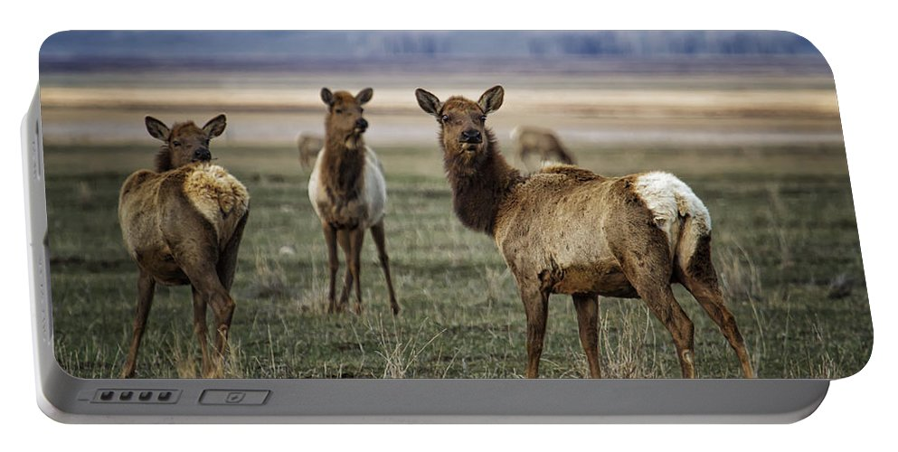 Elk Portable Battery Charger featuring the photograph Alert On The Home Front by Belinda Greb