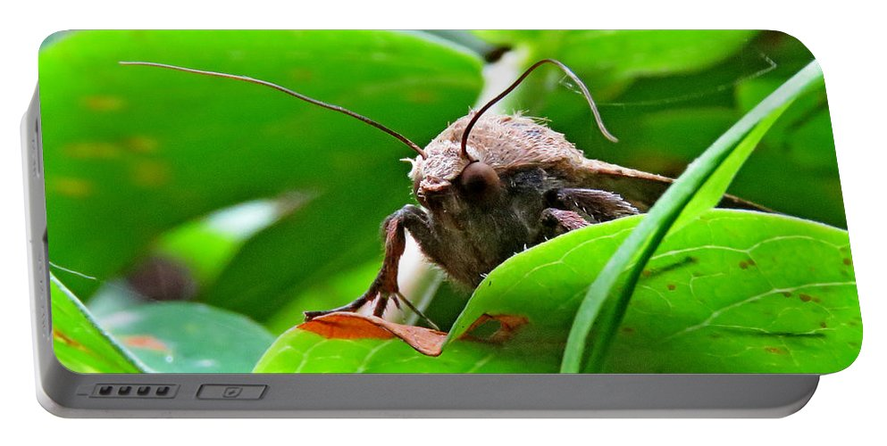 Moth Portable Battery Charger featuring the photograph Alien Moth by John Topman