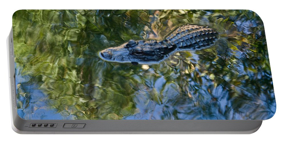 Alligator Portable Battery Charger featuring the photograph Alligator Stalking by Douglas Barnett