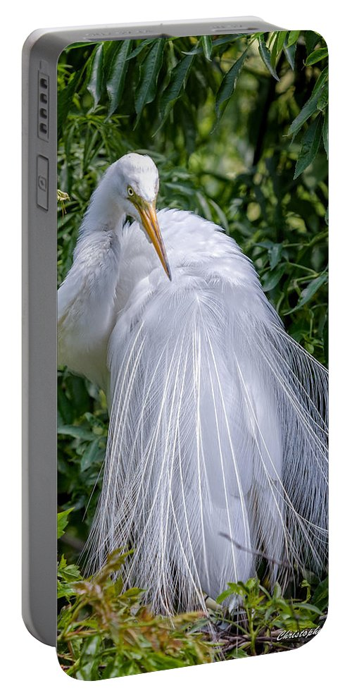 Avian Portable Battery Charger featuring the photograph Alluring In White by Christopher Holmes