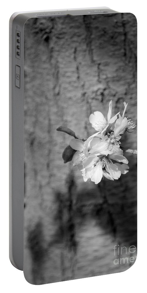 Almond Orchard Portable Battery Charger featuring the photograph Almond Orchard 2 by Marta Robin Gaughen