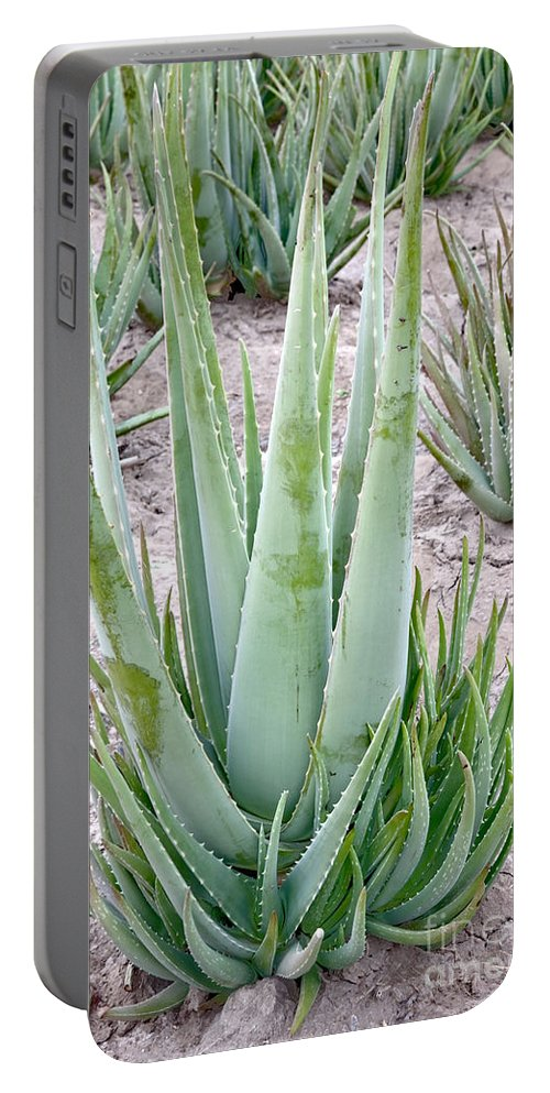 Aloe Vera Portable Battery Charger featuring the photograph Aloe Vera Plant by Inga Spence