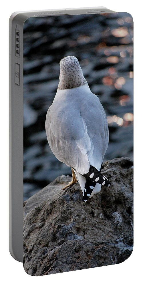 Seagull Portable Battery Charger featuring the photograph Alone by Robert Meanor