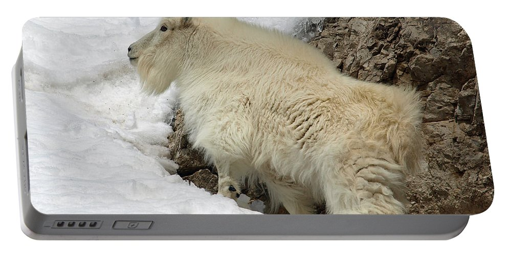 Animals Portable Battery Charger featuring the photograph Along The Rock by DeeLon Merritt