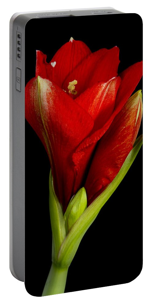 Amaryllis Portable Battery Charger featuring the photograph Amaryllis 12-23-2010 by James BO Insogna