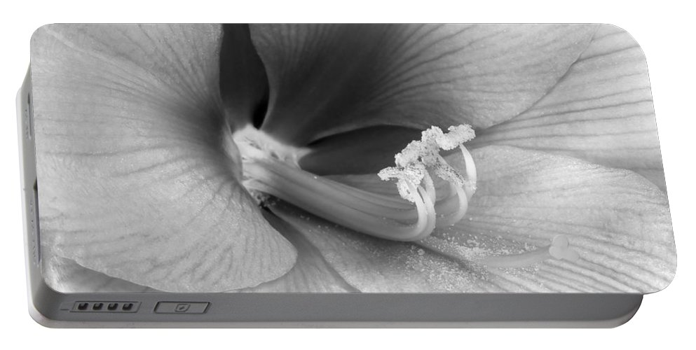 Amaryllis Portable Battery Charger featuring the photograph Amaryllis Flower Bloom In Black And White by James BO Insogna