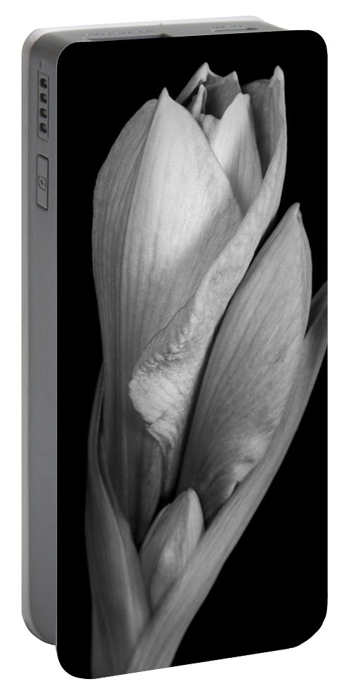 Amaryllis Portable Battery Charger featuring the photograph Amaryllis In Black And White by James BO Insogna