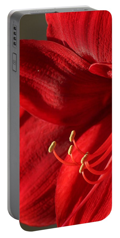 Flower Portable Battery Charger featuring the photograph Amaryllis6689 by Gary Gingrich Galleries