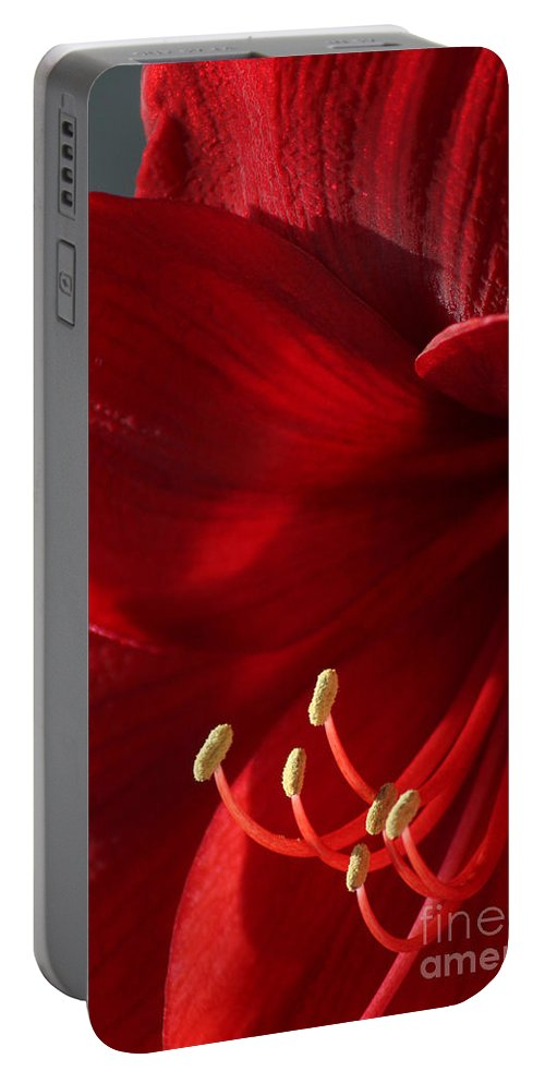 Flower Portable Battery Charger featuring the photograph Amaryllis6790 by Gary Gingrich Galleries