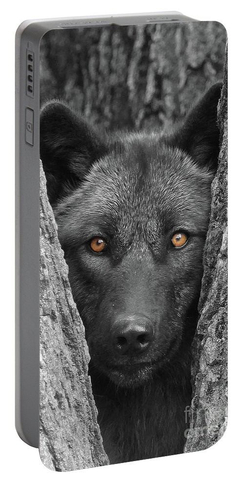 Wolf Portable Battery Charger featuring the photograph Amber by Shari Jardina