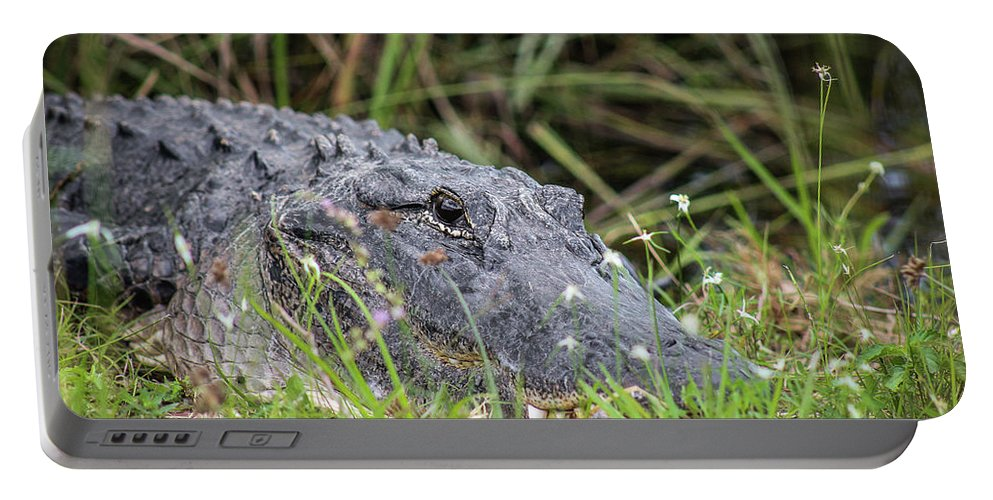 Daytime Portable Battery Charger featuring the photograph American Alligator by Scott Dry