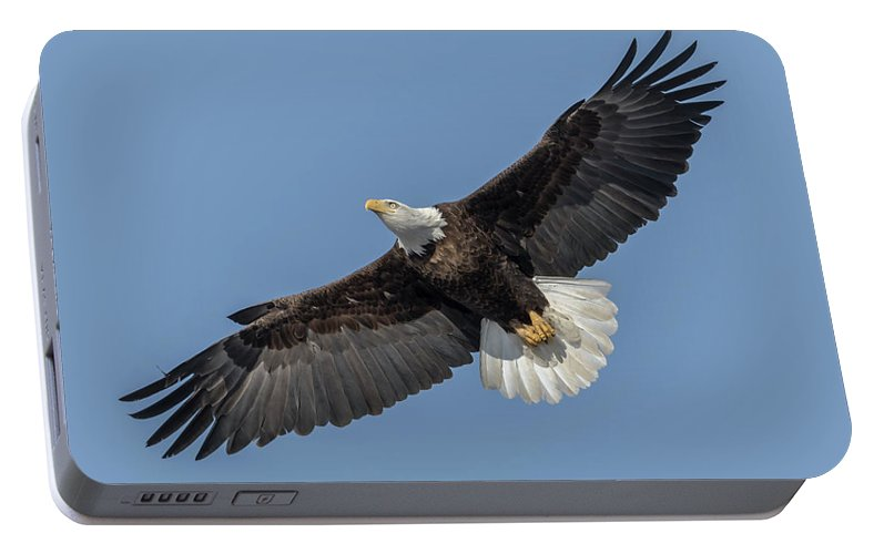 American Bald Eagle Portable Battery Charger featuring the photograph American Bald Eagle 2017-18 by Thomas Young