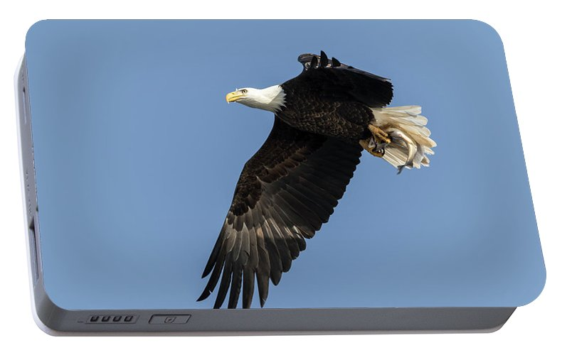American Bald Eagle Portable Battery Charger featuring the photograph American Bald Eagle 2017-4 by Thomas Young