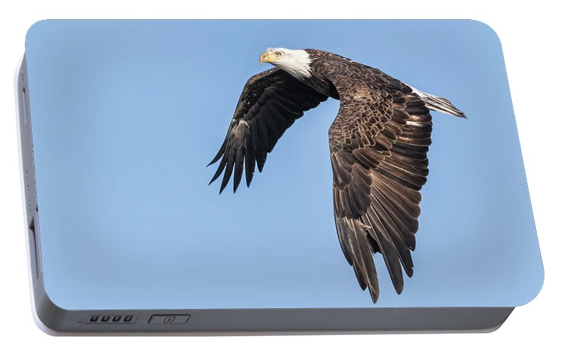 American Bald Eagle Portable Battery Charger featuring the photograph American Bald Eagle 2017-5 by Thomas Young