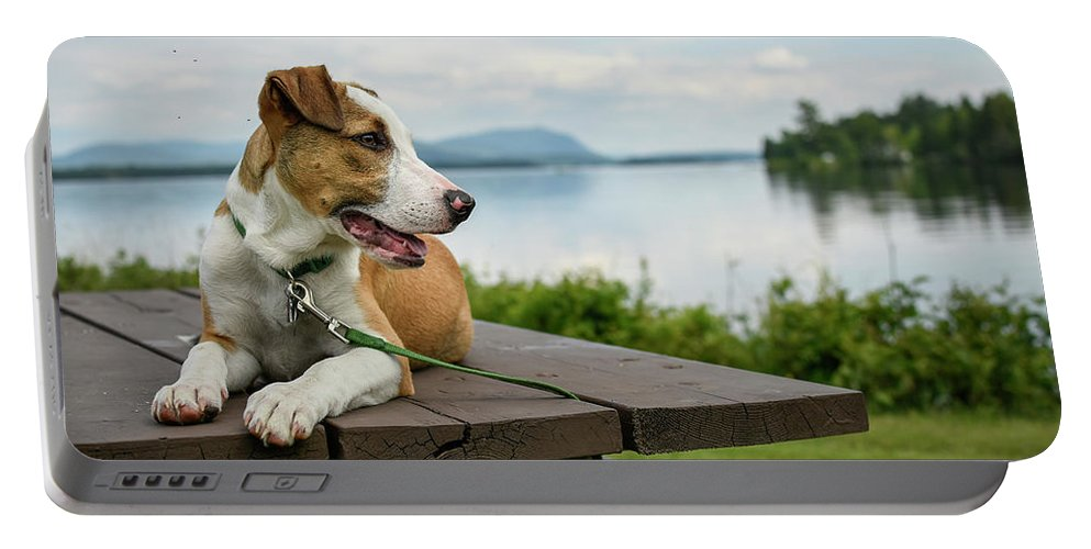 Hound Dog Portable Battery Charger featuring the photograph American Breed On Table by Justin Mountain