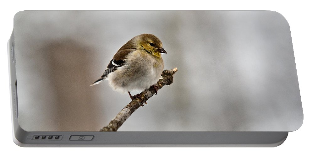 Cove Portable Battery Charger featuring the photograph American Golden Finch Winter Plumage 1 by Douglas Barnett