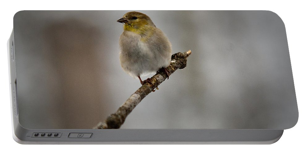 American Portable Battery Charger featuring the photograph American Golden Finch Winter Plumage by Douglas Barnett