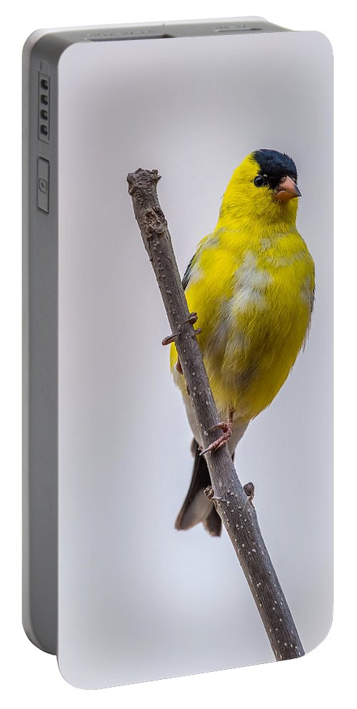 Male Portable Battery Charger featuring the photograph American Goldfinch Front by Paul Freidlund
