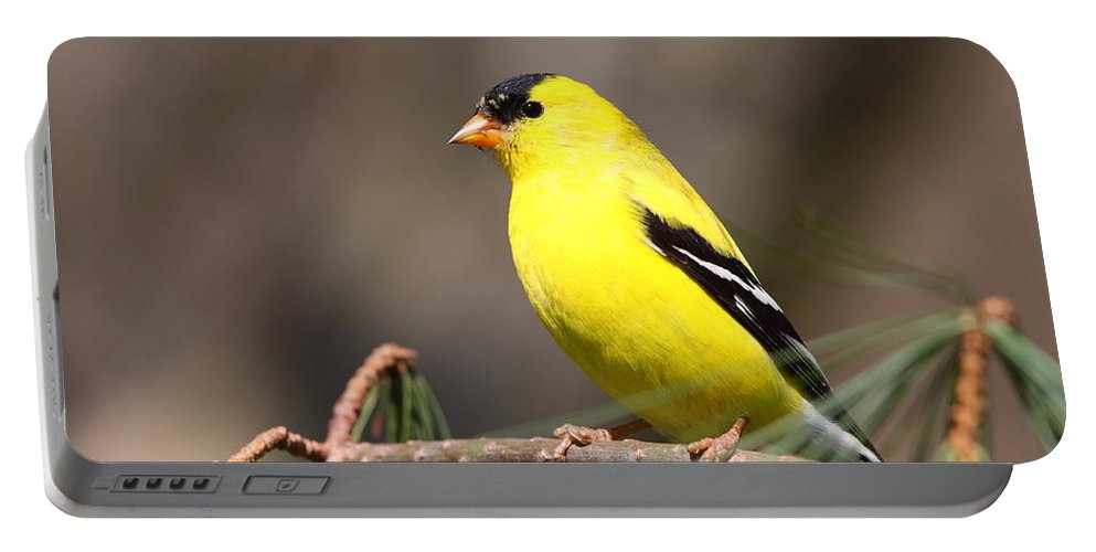 Goldfinch Portable Battery Charger featuring the photograph American Goldfinch II by Bruce J Robinson