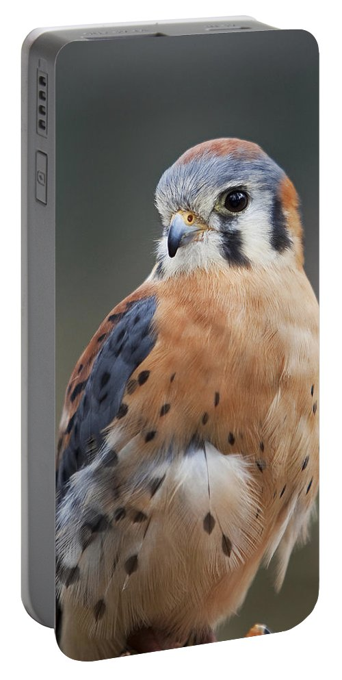 Bird Portable Battery Charger featuring the photograph American Kestrel by Amy Jackson