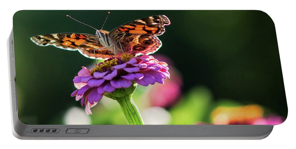 Butterflies Portable Battery Charger featuring the photograph American Lady by Linda Shannon Morgan