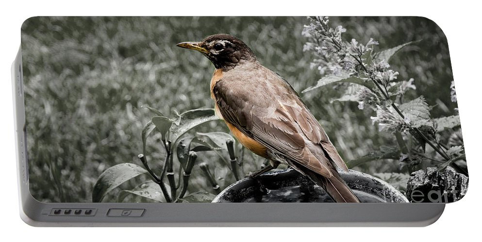 Plumage Portable Battery Charger featuring the photograph American Red Robin by Deborah Klubertanz