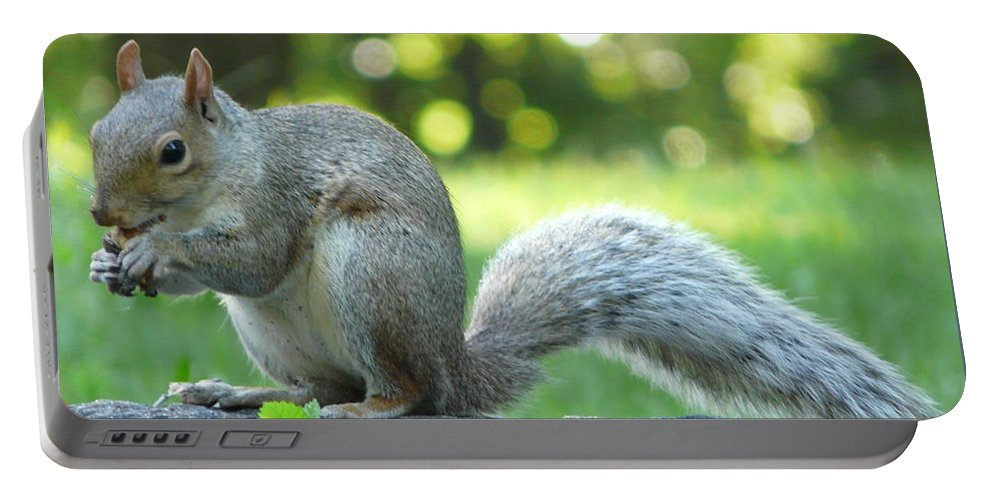 New York Portable Battery Charger featuring the photograph American Squirrel by Valerie Ornstein