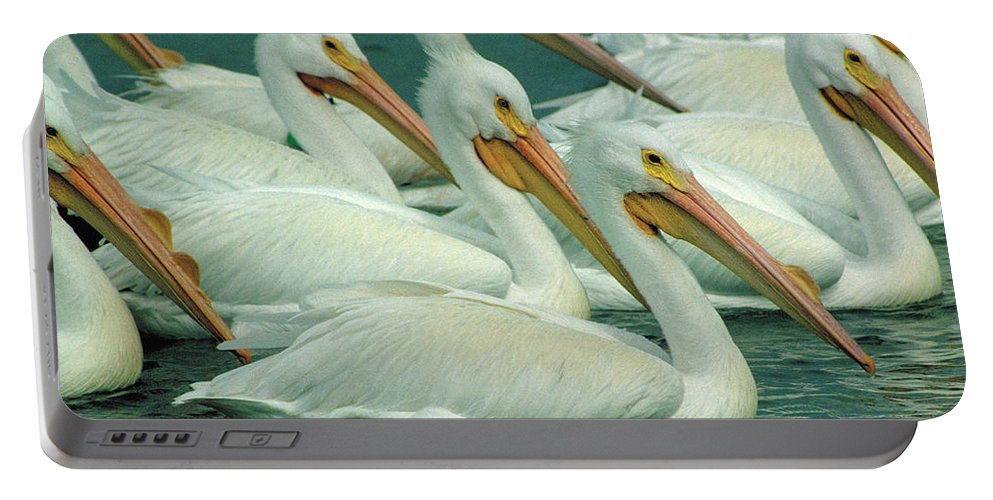 White Pelicans Portable Battery Charger featuring the photograph American White Pelicans by Bruce Morrison