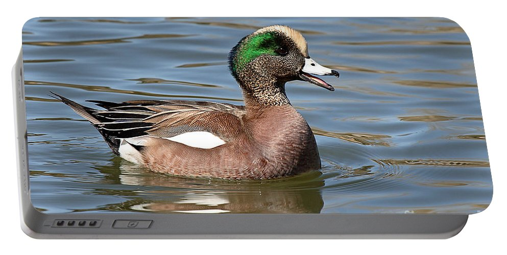 Widgeon Portable Battery Charger featuring the photograph American Widgeon Calling From The Water by Max Allen
