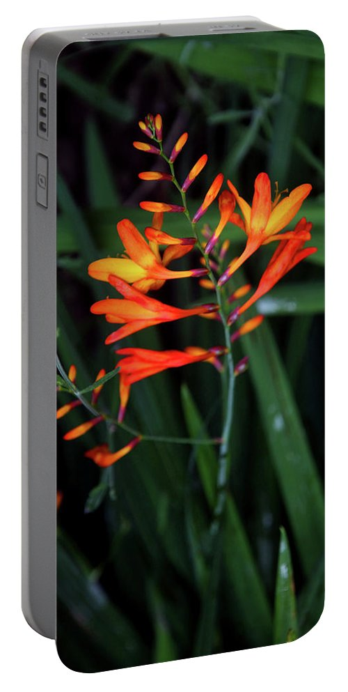 Btadford Portable Battery Charger featuring the photograph Amid The Tramping by Jez C Self