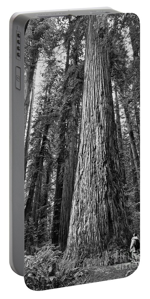 Redwoods Portable Battery Charger featuring the photograph Among Giants by Jamie Pham