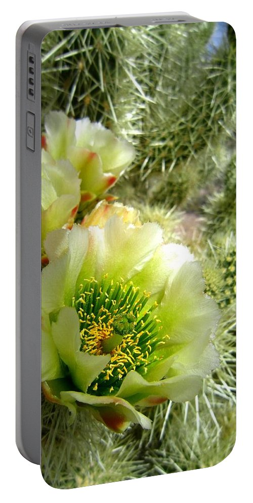 Cactus Portable Battery Charger featuring the photograph Among The Thorns 3 by Nelson Strong
