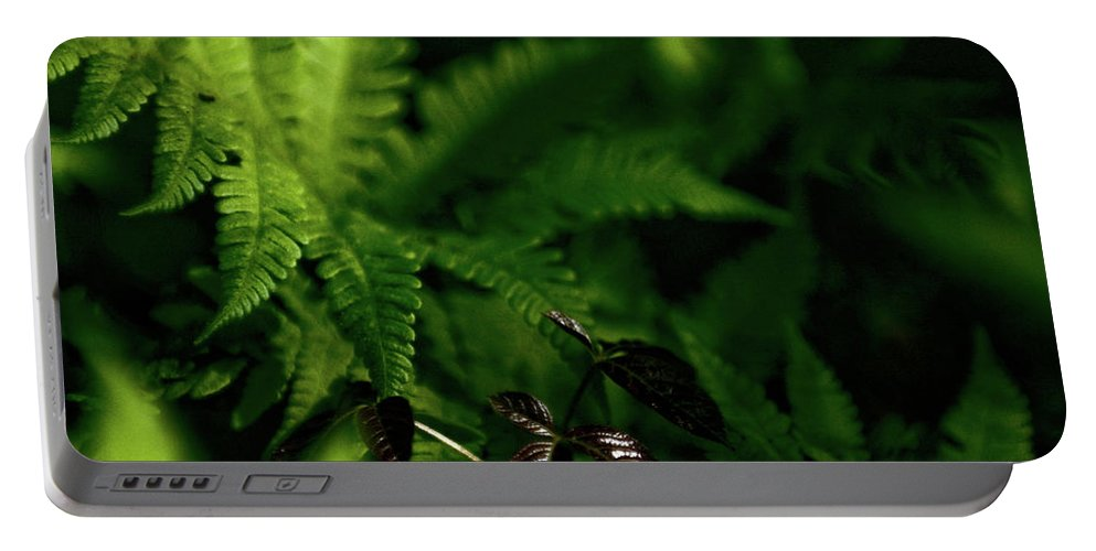 fern Portable Battery Charger featuring the photograph Amongst The Fern by Paul Mangold