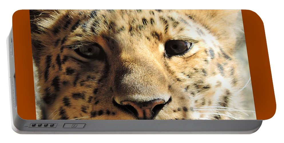 Amur Portable Battery Charger featuring the photograph Amur Leopard Stare by Tracy Welter