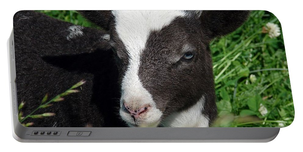 Jacob Portable Battery Charger featuring the photograph Amy's Lamb by Cassie Peters