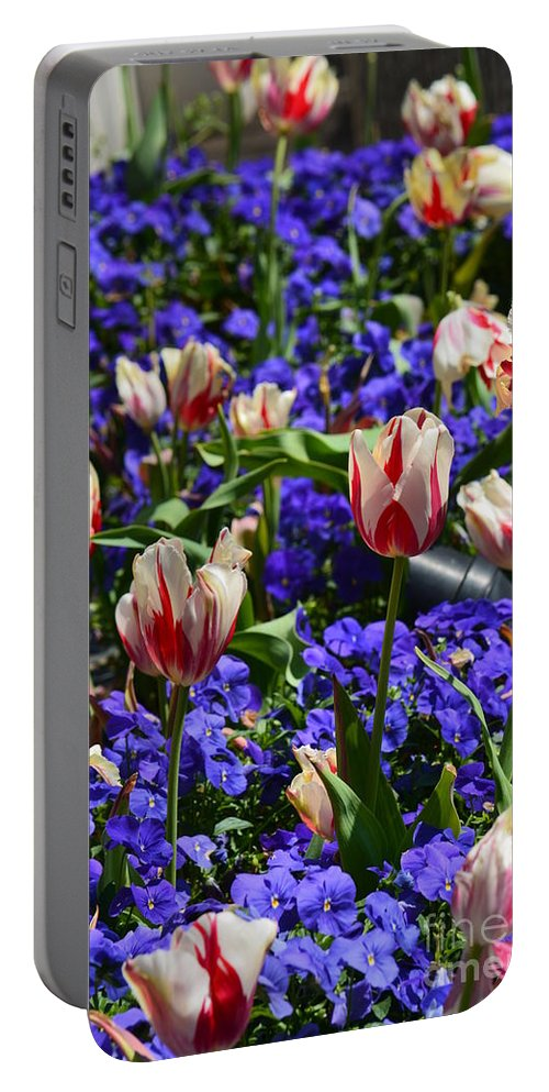 An American Spring Portable Battery Charger featuring the photograph An American Spring by Maria Urso