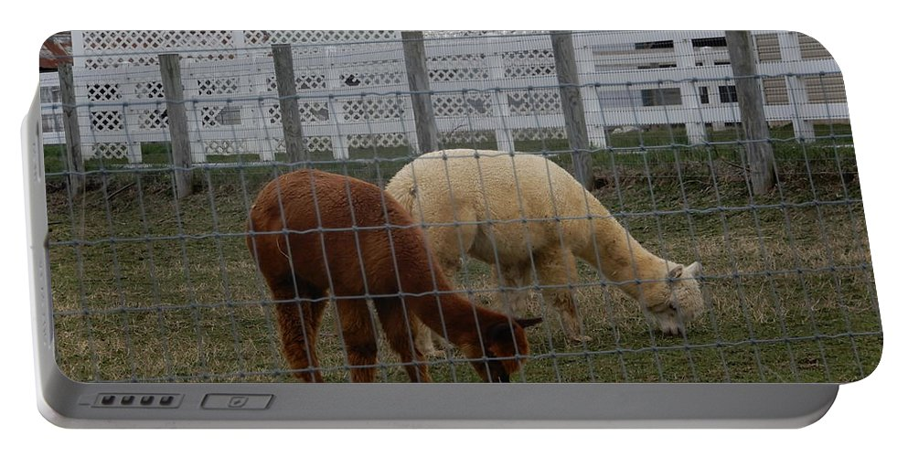 Amish Portable Battery Charger featuring the photograph An Evening Graze by Christine Clark