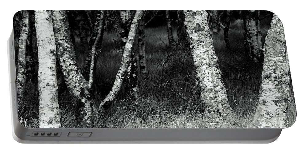 Trees Portable Battery Charger featuring the photograph An Irish Copse by Rachel Narvaez