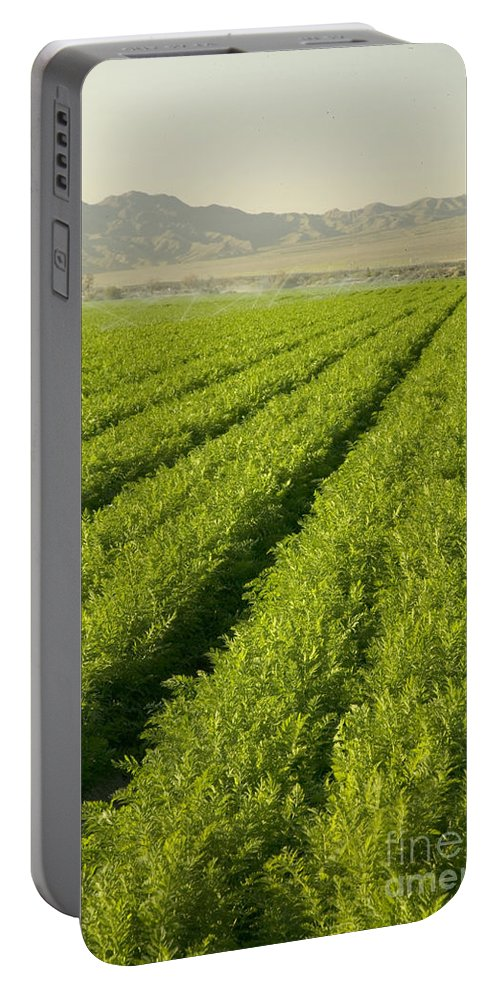 Carrot Field Portable Battery Charger featuring the photograph An Organic Carrot Field by Inga Spence