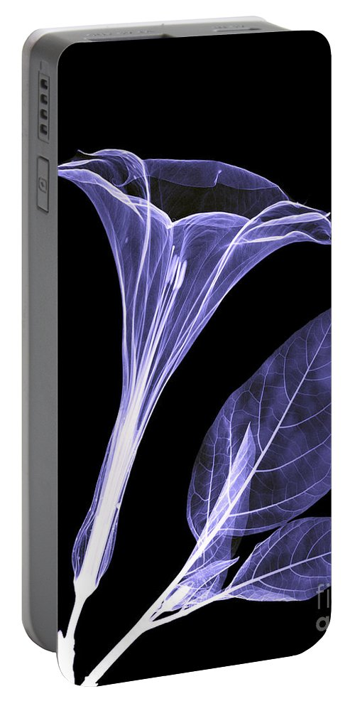 Xray Portable Battery Charger featuring the photograph An X-ray Of A Datura Flower by Ted Kinsman