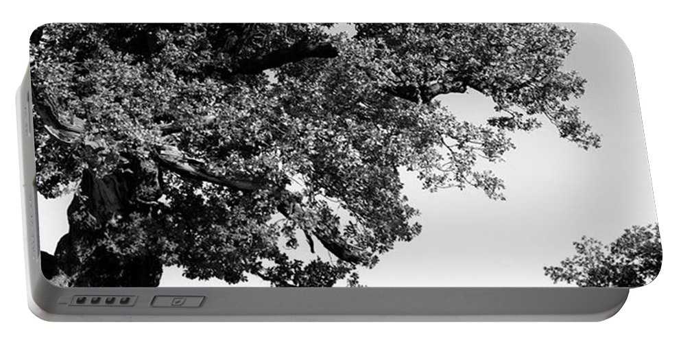Woodland Portable Battery Charger featuring the photograph Ancient Oak, Bradgate Park by John Edwards