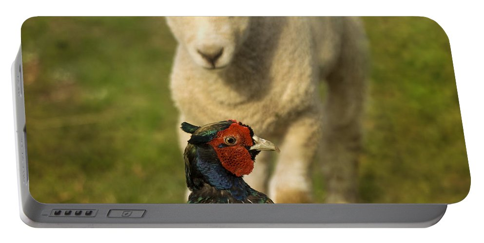 Lamb Portable Battery Charger featuring the photograph And Who Are You by Angel Ciesniarska