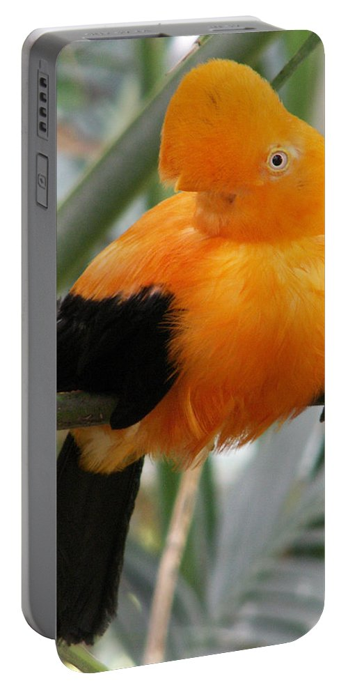 Bird Portable Battery Charger featuring the photograph Andean Cock Of The Rock by Amy Fose