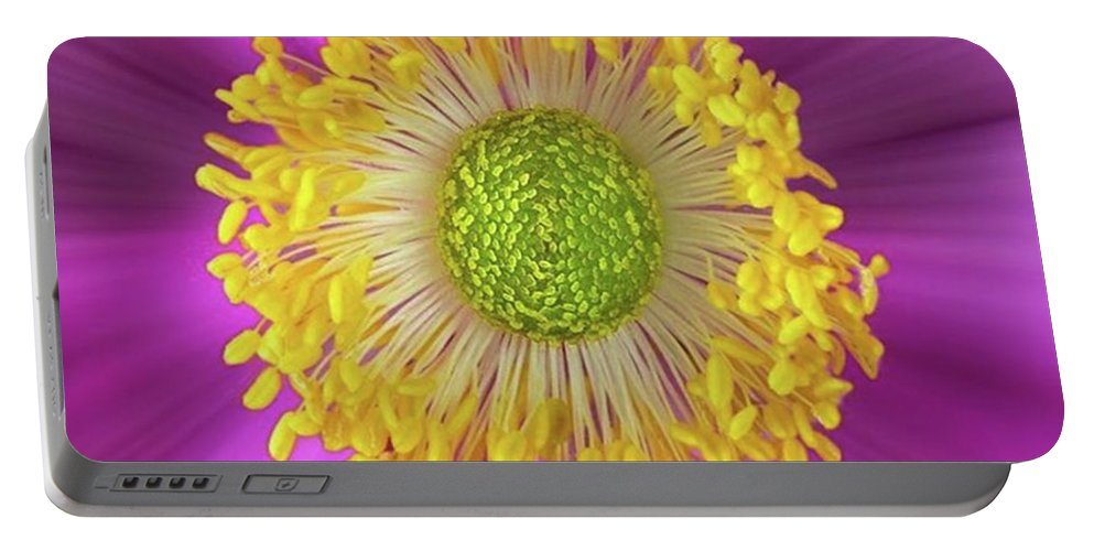 Beautiful Portable Battery Charger featuring the photograph Anemone Hupehensis 'hadspen by John Edwards