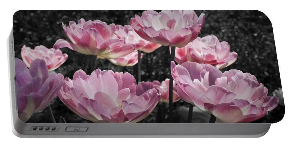 Pink Portable Battery Charger featuring the photograph Angelique Peony Tulips by Teresa Mucha