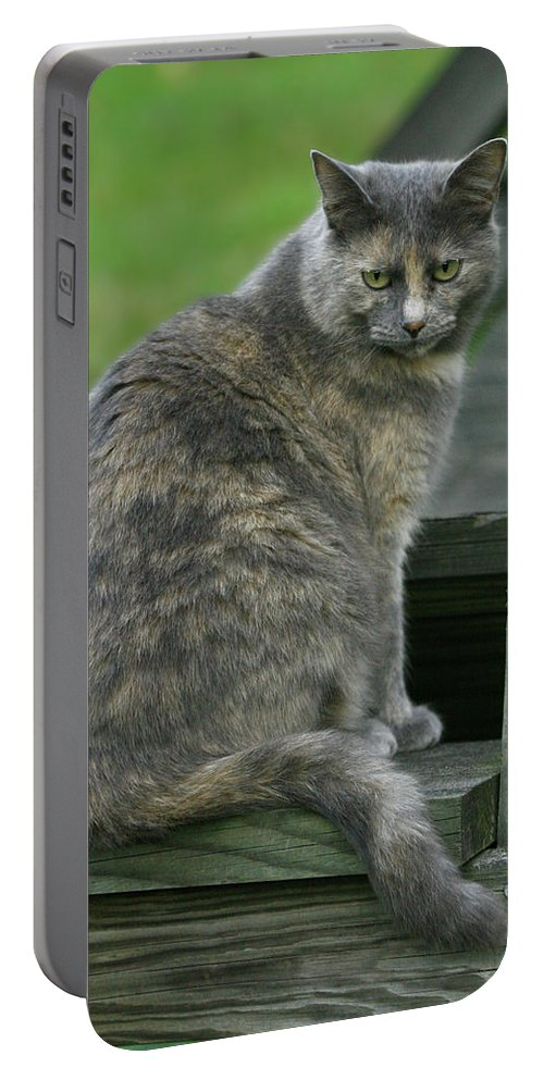 Photo Portable Battery Charger featuring the photograph Angry Cat Named Bird by Cara Bevan