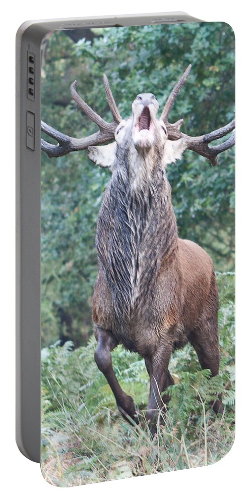 Stag Portable Battery Charger featuring the photograph Angry Stag by Dawn OConnor