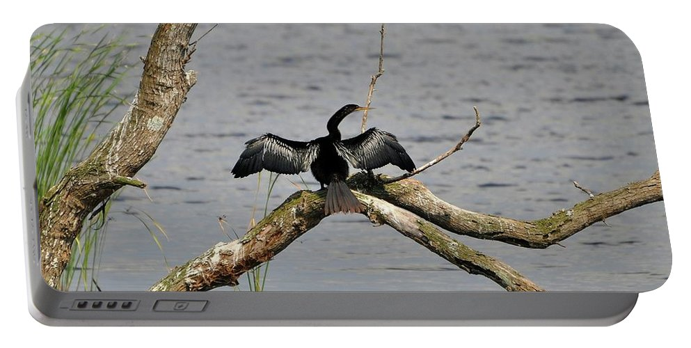 Anhinga Portable Battery Charger featuring the photograph Anhinga And Alligator by Al Powell Photography USA